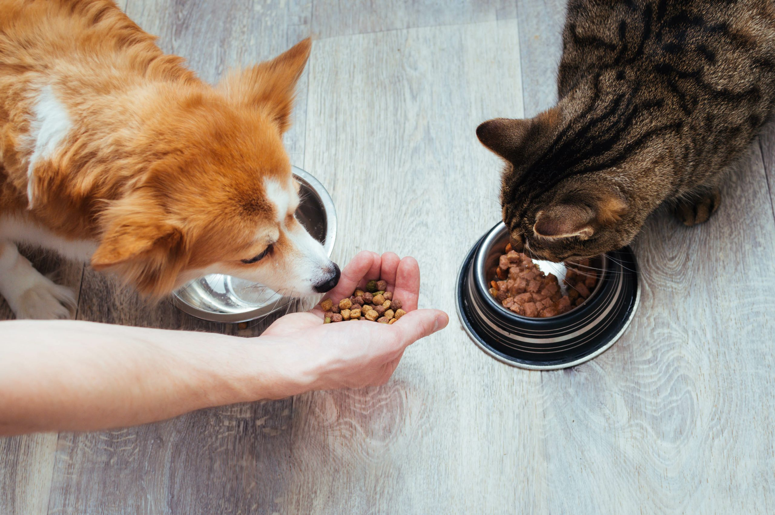 A dog and cat eating food from bowl, for healthy diet choices see a Kentwood Vet Clinic.